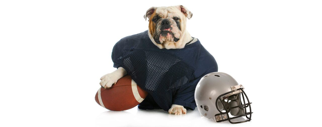 The Texas Bulldog is Rooting for Designated Drivers this Sunday!